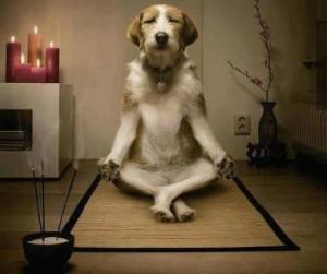 dog-meditating-300x251