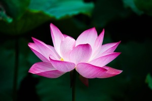 Weekly Spiritual Energy Guidance October 1 - October 7, 2018: Beauty
