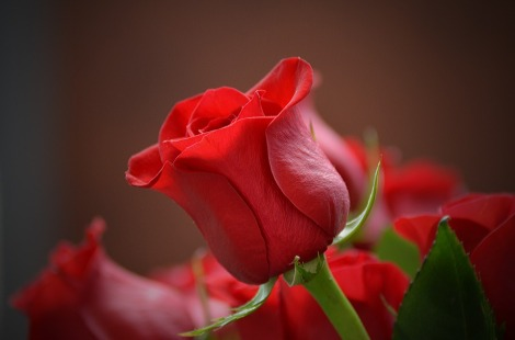 flower-3115353_960_720