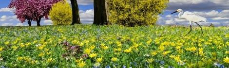WEEKLY SPIRITUAL ENERGY -May 25, 2020 – May 31, 2020 by Lady Dyanna