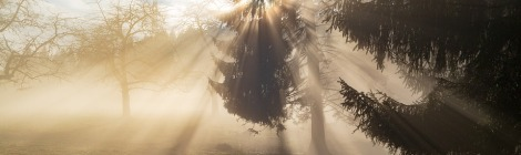 WEEKLY SPIRITUAL ENERGY- November 30, 2020 - December6, 2020