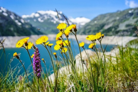 WEEKLY SPIRITUAL ENERGY- June 14, 2021 - June 20, 2021, by Lady Dyanna